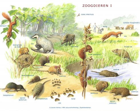 Zoekkaart Zoogdieren 1
