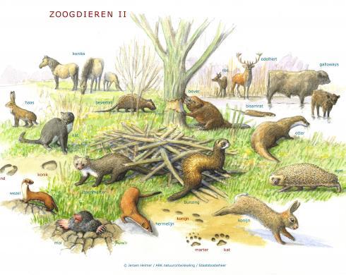 Zoekkaart Zoogdieren 2
